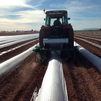 Campo-Cultivo-ecologico_Gonserbio2